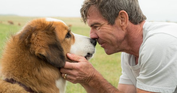 Of A Dog S Purpose