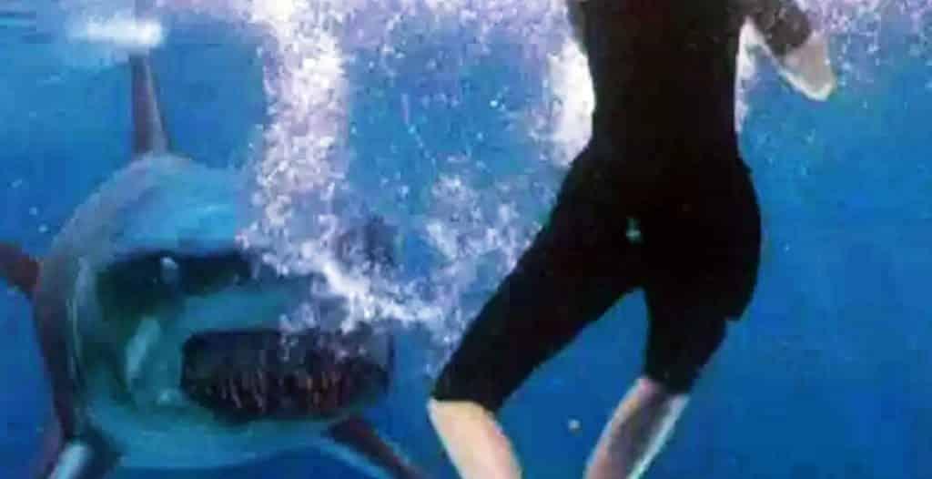 Deep Blue Sea Movie Shark