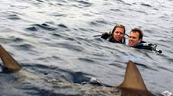 shark films open water movie