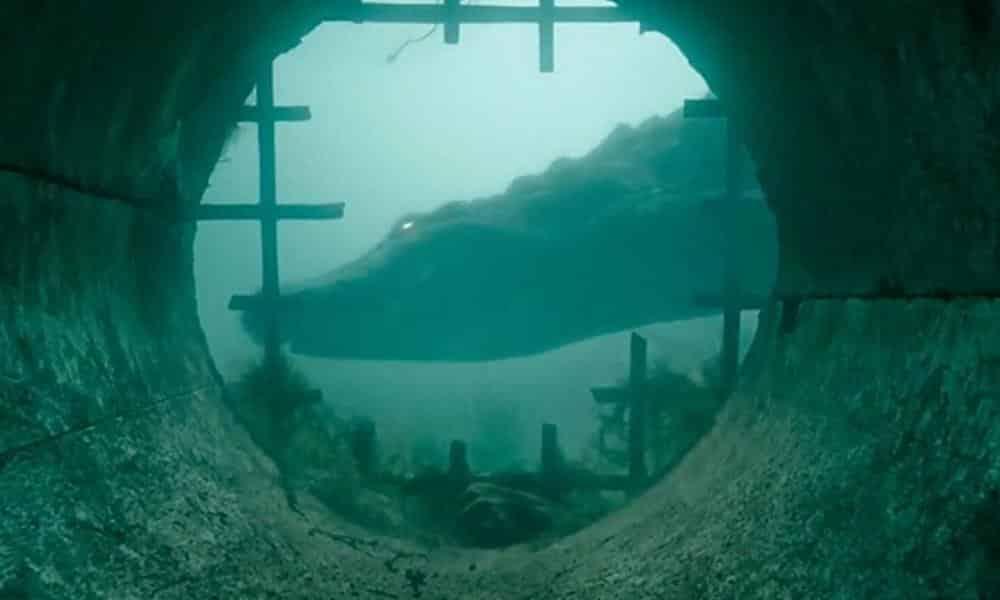 Movie Poster 2019: 'Crawl' Trailer Shows Survival Against A Hurricane
