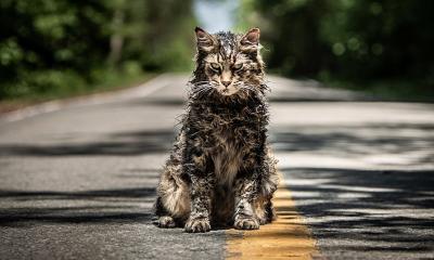 Pet Sematary Remake Church The Cat