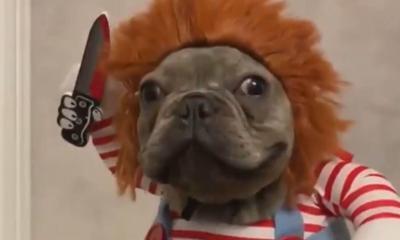 Chucky Dog