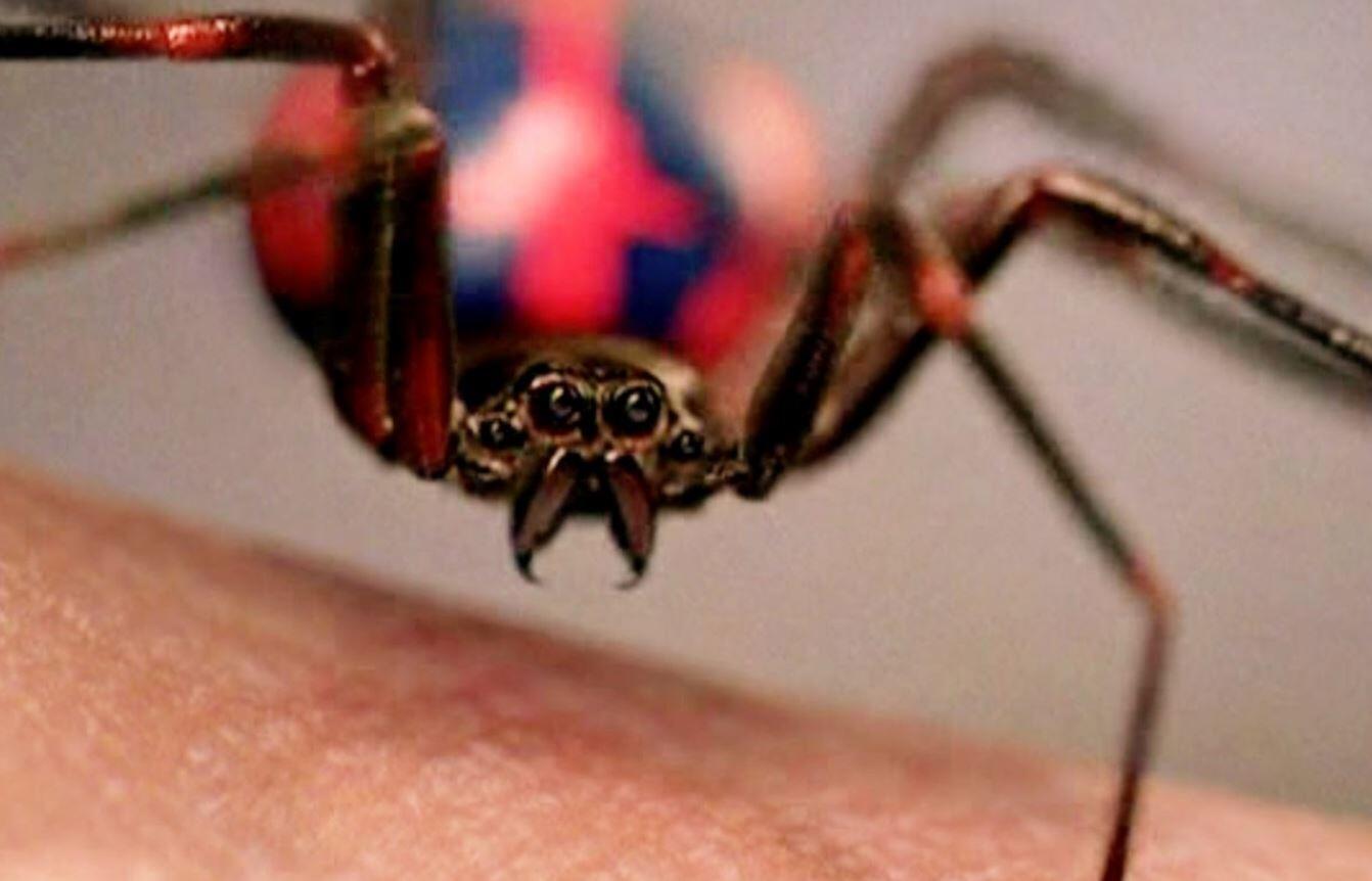 spider-man bite