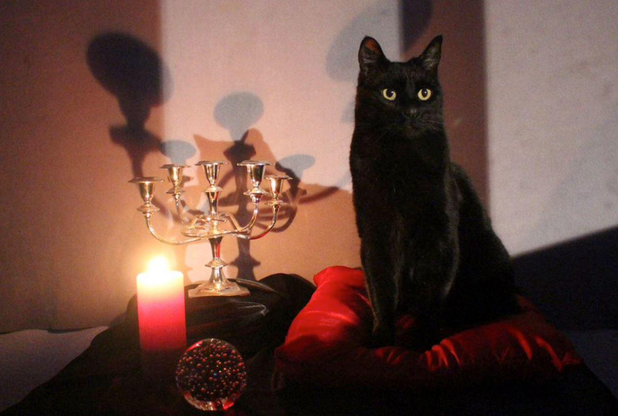 lindley street haunting talking cat
